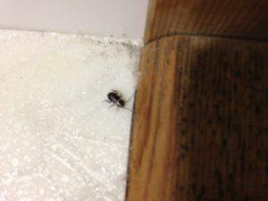 ゴキブリの赤ちゃんが出たらどうする?対策方法はこれ